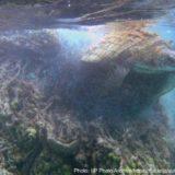 ゴーストネットに絡まるウミガメ