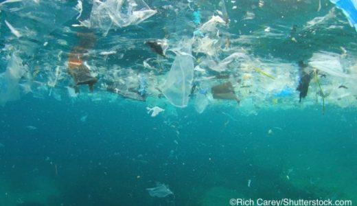 2050年-海のプラスチックが魚の量を超えるか計算してみる