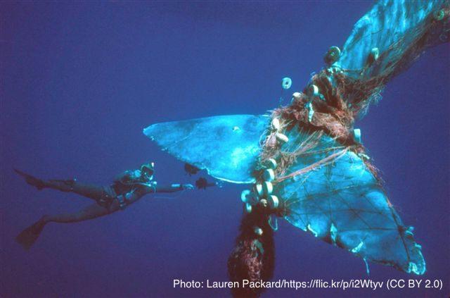 漁具に絡まるクジラの尾びれ