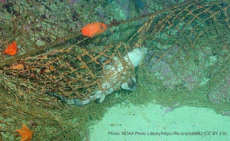 ゴーストネットに絡まり死んでいるサメ
