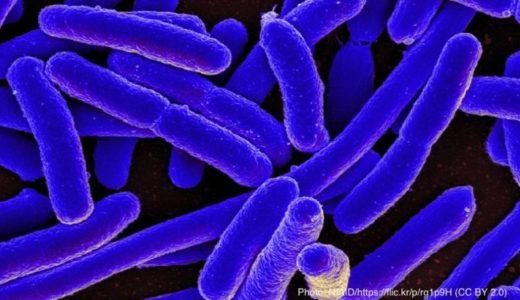 プラスチックごみが増えると海水浴中に病原菌に感染?