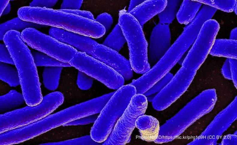 バクテリア(大腸菌)