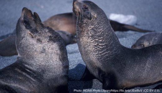 調査した全50頭の海洋哺乳類からマイクロプラスチック見つかる