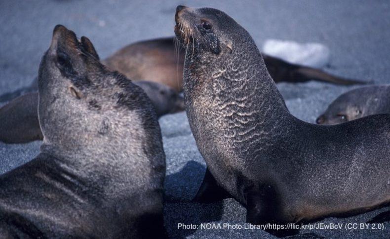 アザラシ・海洋ごみ|マイクロプラスチック|問題・影響・原因|海洋汚染|使い捨てプラスチック|プラごみ