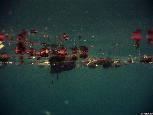 海面に浮かぶマイクロプラスチック