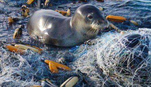 プラスチック汚染- 海洋生物と生態系への影響