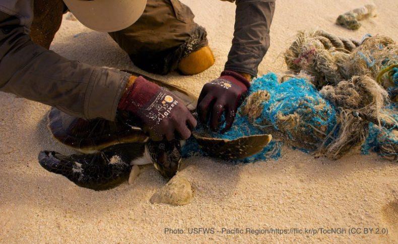 絡まるウミガメを助ける男性