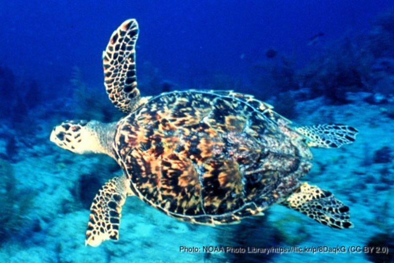 ウミガメ|マイクロプラスチック|問題・影響・原因|海洋汚染|使い捨てプラスチック|プラごみ