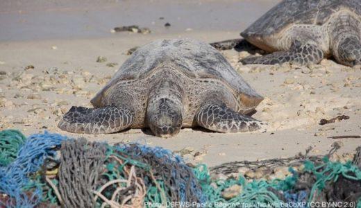 ウミガメとビーチを守る、ナイジェリアの女性活動家