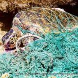 漁網に絡まるウミガメ