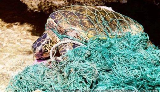 ウミガメの行く手を阻む海洋プラスチックごみの問題