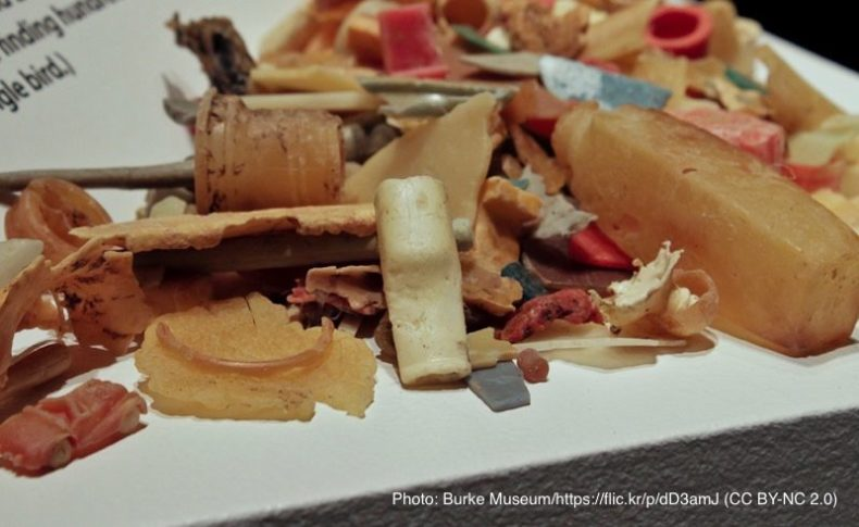 海鳥の胃からでてきたプラスチック