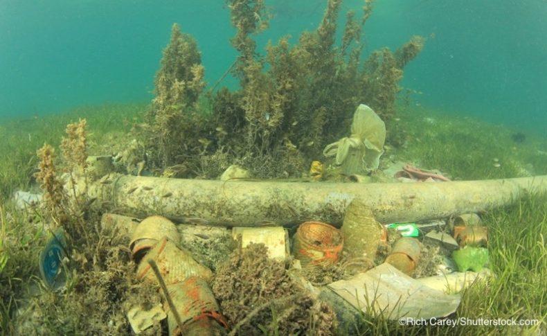 海底に覆い被さるごみ