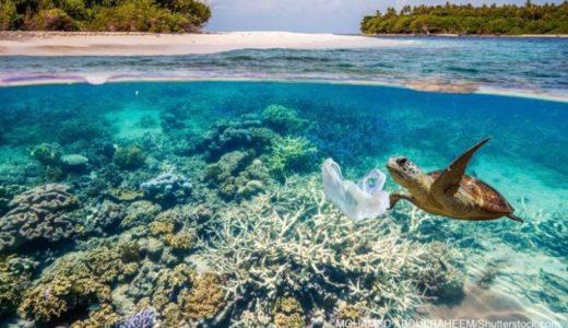 プラスチックごみをクラゲと間違えて食べるウミガメ