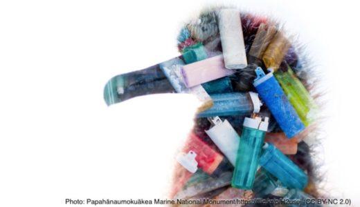 海洋生物によって運ばれるプラスチックごみ