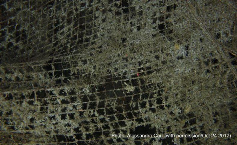 海底の漁網