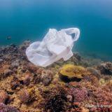 サンゴ礁に漂うレジ袋