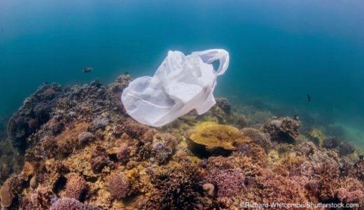 マイクロプラスチックを餌と間違えて食べるサンゴ