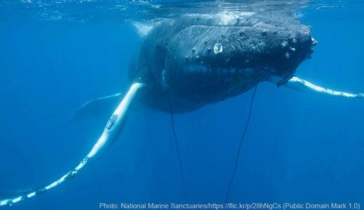 海プラスチックごみに絡まるクジラ