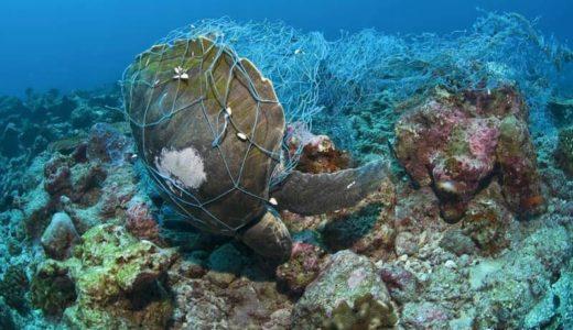 海のプラスチックごみに絡まるウミガメ