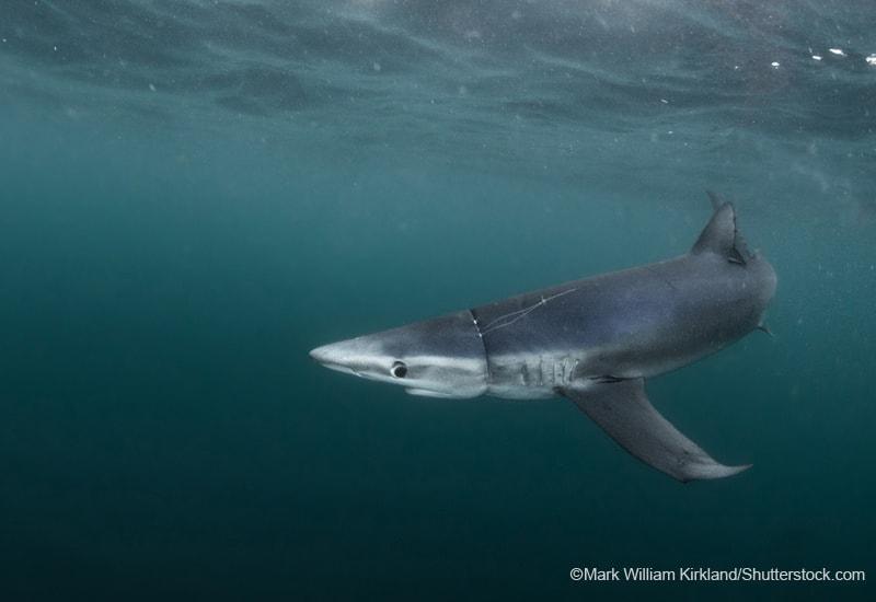 プラスチックに絡まるサメ