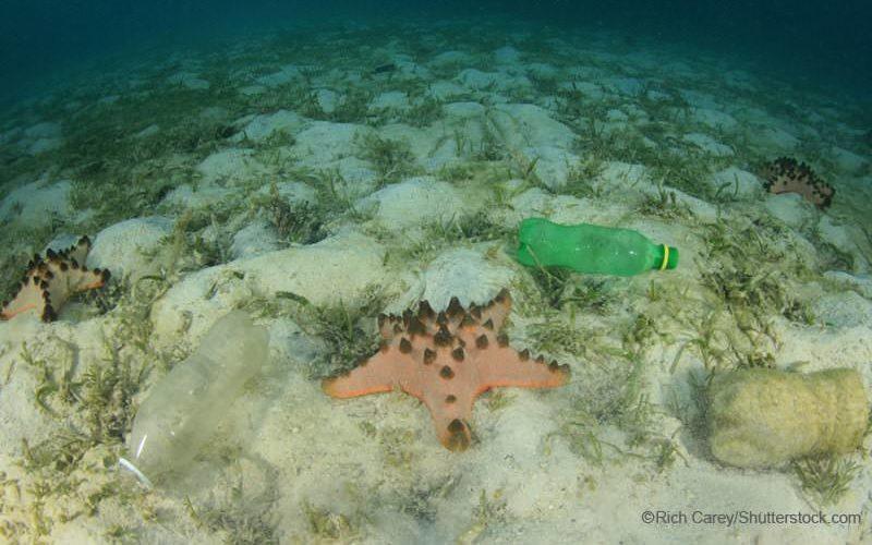海底に沈むペットボトルとヒトデ