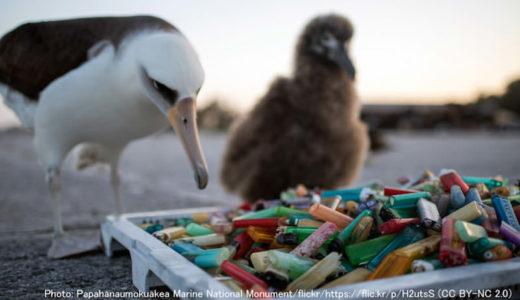 海鳥にプラスチックの有害物質が蓄積 調査対象の4割から検出