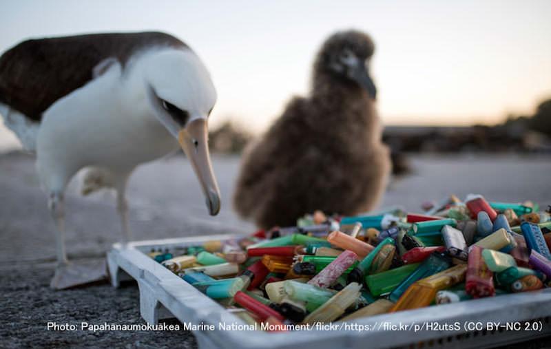 海鳥とプラスチックごみ