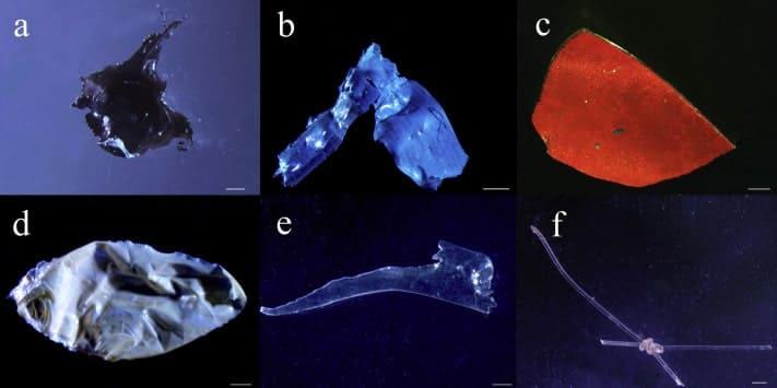 アマゾン川の魚から見つかったプラスチック
