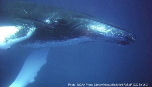 死んだクジラの胃袋から大量のプラごみ インドネシアで発見