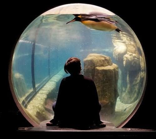 水族館のペンギン