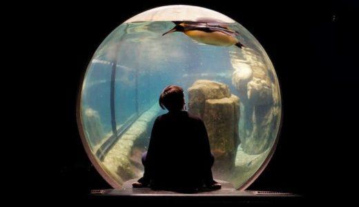 日本の水族館&動物園も脱プラへ! 生物のためにコスト増でもやるのです