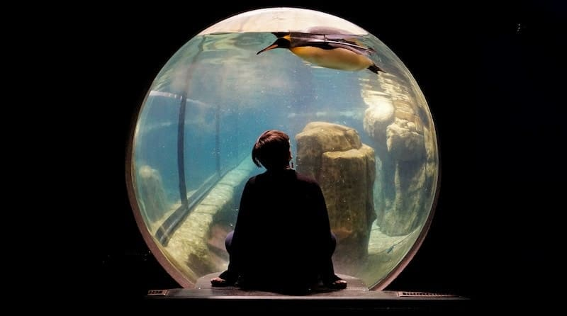 水族館のペンギンをみる女性