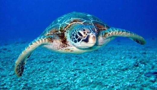 全7種のウミガメからマイクロプラスチックを検出
