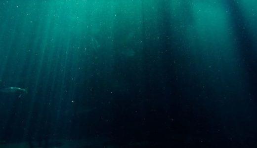 マリアナ海溝から高濃度のマイクロプラスチック