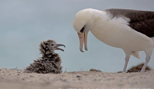 北極圏の海鳥の卵からプラスチック添加剤の陽性反応