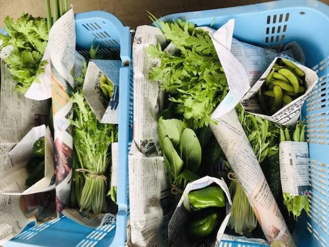 人数分の野菜セットが並べてある様子