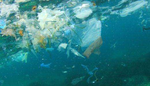 プラ汚染でダメージ!全世界の10%の酸素を作る海のバクテリア