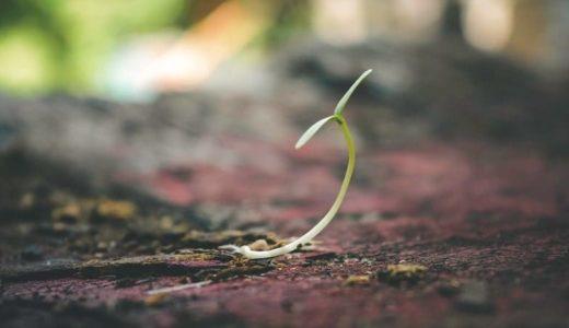 ミミズや植物の成長を阻害?土の中のマイクロプラスチック問題