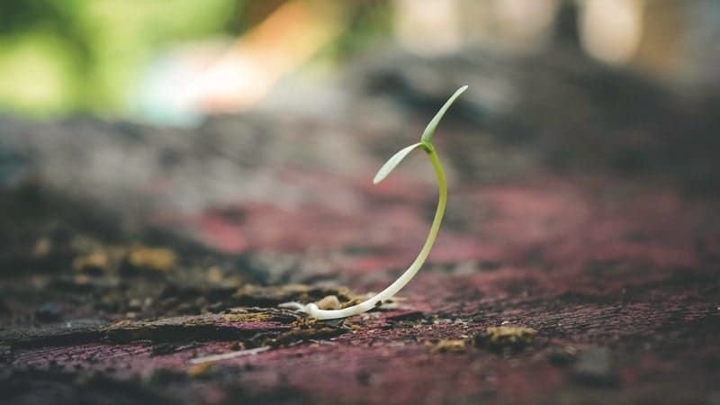 土の中から出る芽