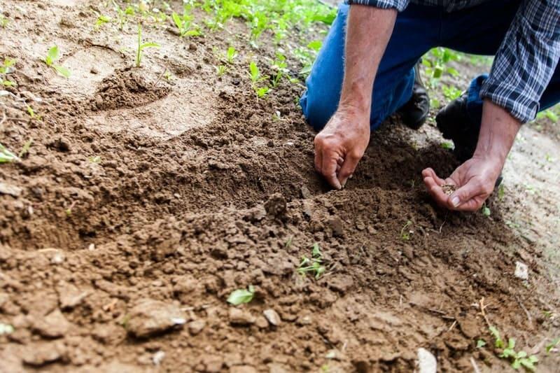 畑に種を植える男性