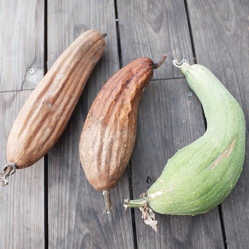 カラカラに乾燥したヘチマ
