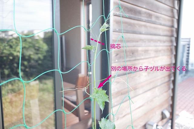 わき芽の摘芯