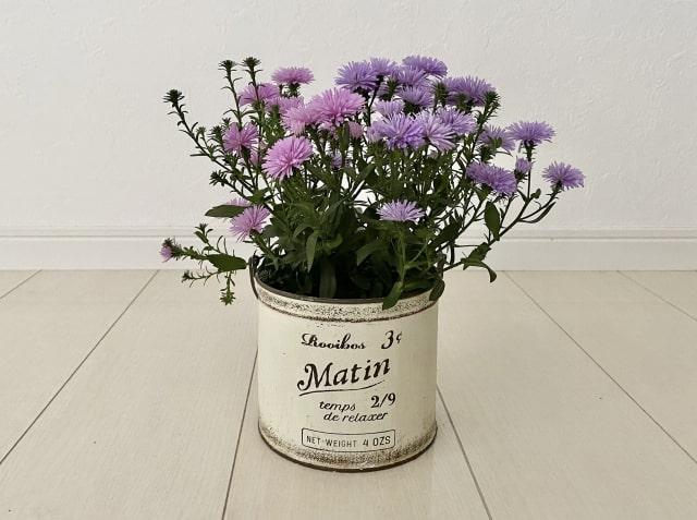 アンティークの白い缶に紫色の花を植えている様子