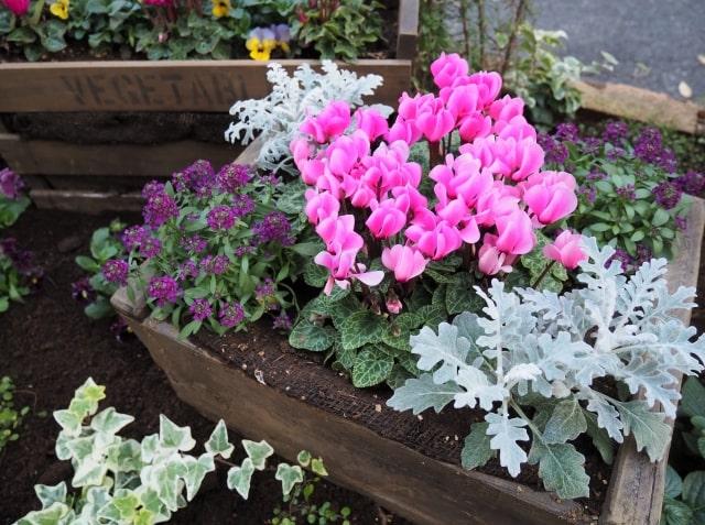 木箱をプランターがわりにして花を植えている様子